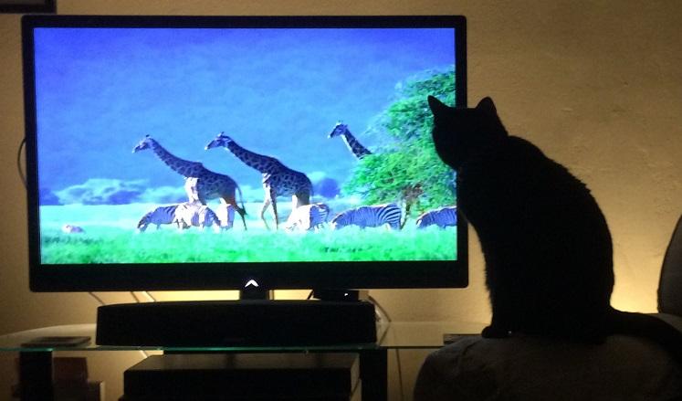 gledamo-tv